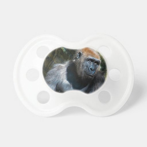 Foto del animal de la fauna del primate del mono d chupetes de bebé