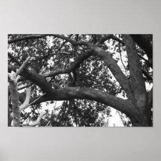Foto del árbol blanco y negro póster
