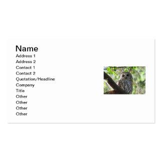 Foto del búho tarjetas de visita