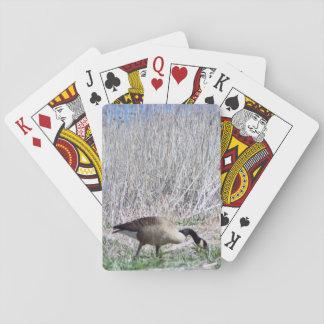 Foto del ganso baraja de cartas