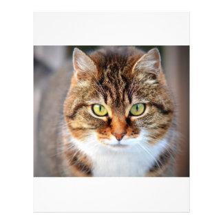 Foto del gato