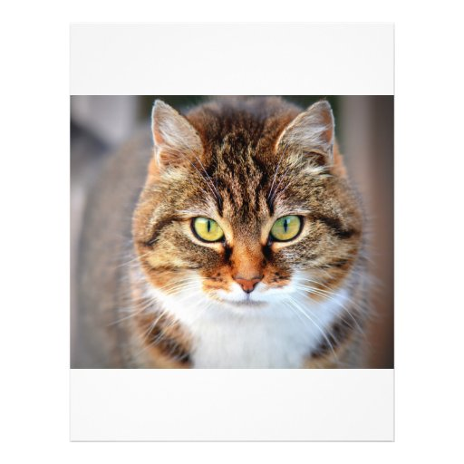 Foto del gato tarjeton