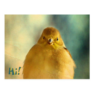Foto del Goldfinch Postal