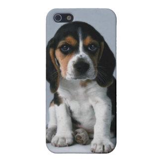 Foto del perro de perrito del beagle iPhone 5 cárcasas