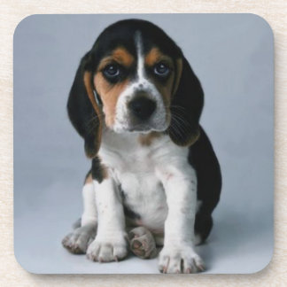 Foto del perro de perrito del beagle posavasos