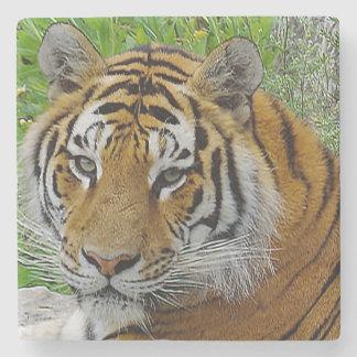 Foto del primer del tigre siberiano de la cara posavasos de piedra