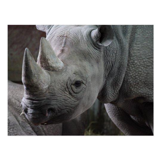 Foto del rinoceronte negro postal