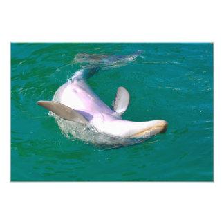 Foto Delfín de Bottlenose al revés