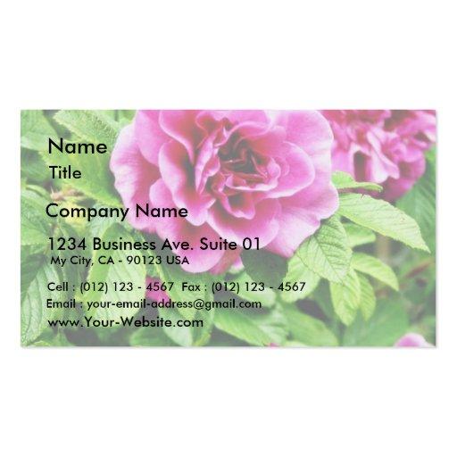 Foto detallada de la flor color de rosa tarjeta de visita
