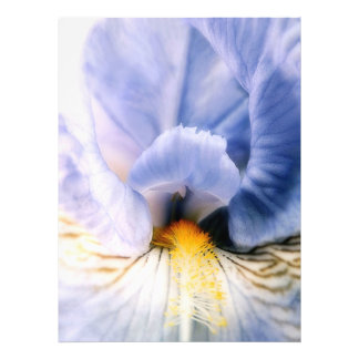 Foto Ejecutante del iris