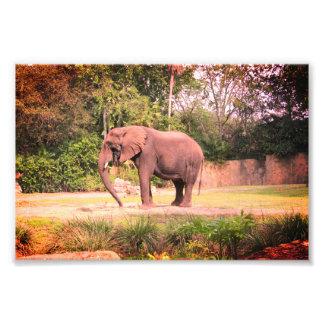 Foto Elefante