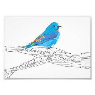 Foto En alguna parte sobre la impresión del Bluebird