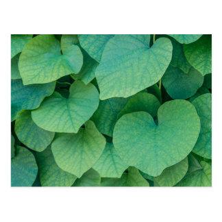Foto en forma de corazón verde hermosa de la postal
