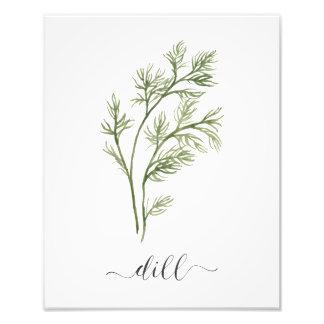 Foto Eneldo botánico de la impresión de la hierba de la