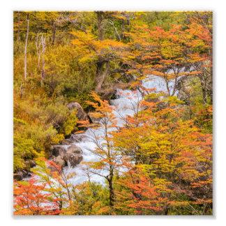 Foto Escena coloreada del paisaje del bosque, Patagonia