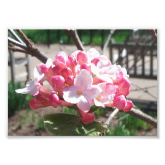 Foto Estampado de flores