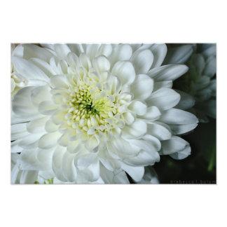 Foto Estampado de flores del crisantemo
