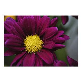 Foto Estampado de flores púrpura