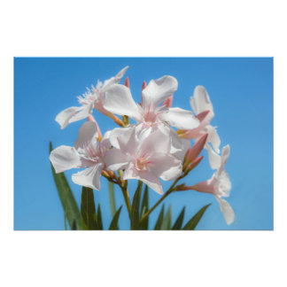 Foto Flora blanca