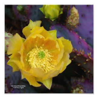 Foto Flores púrpuras del amarillo del cactus de la