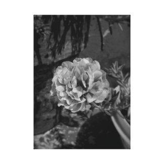Foto flowar del color gris blanco y negro lienzo