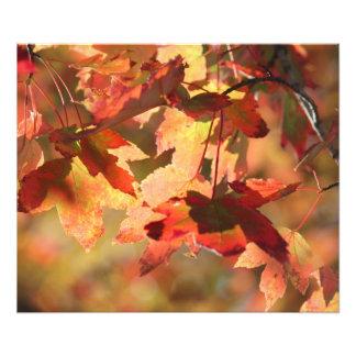 Foto Follaje de otoño