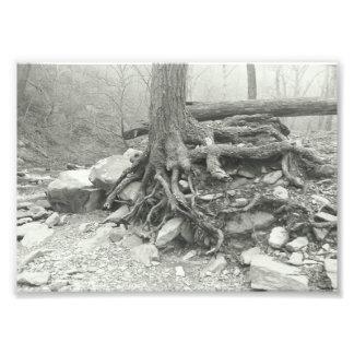 Foto Fotografía blanco y negro de las viejas raíces del