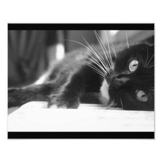 Foto Gato blanco y negro