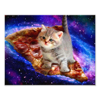 Foto gato de la pizza - gatos lindos - gatito - gatitos