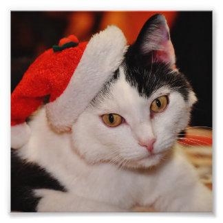Foto Gato de Papá Noel - Felices Navidad - acaricie el