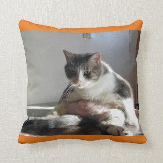 Foto gorda del gato de Tabby en la almohada