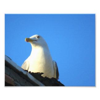 foto grande del pájaro de Estambul