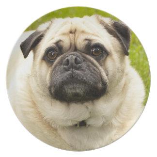 Foto hermosa del perro lindo del perro del barro a plato de comida