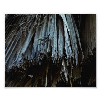 Foto Hojas de la palmera