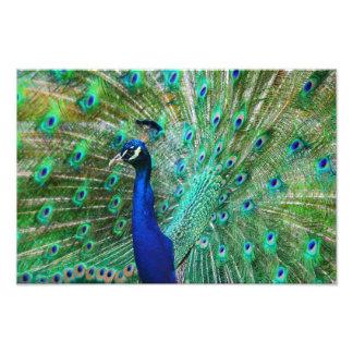 Foto Imagen impresionante del pavo real
