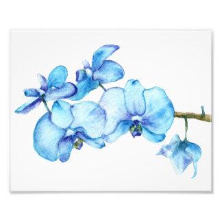 Foto Impresión botánica de la orquídea azul