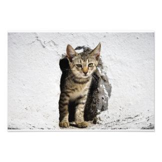 Foto Impresión - gatito griego lindo en Santorini,