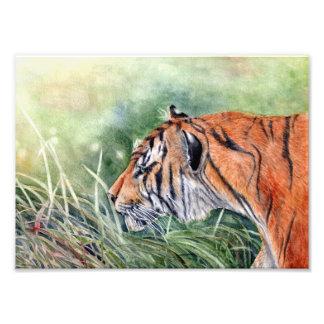 Foto Impresión india del arte del tigre