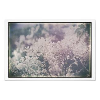 Foto La lila blanca antigua florece lilas florales