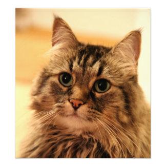 Foto larga de las barbas del gato de los gatos lar