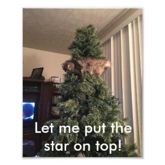 Foto Las ayudas del gato adornan el árbol