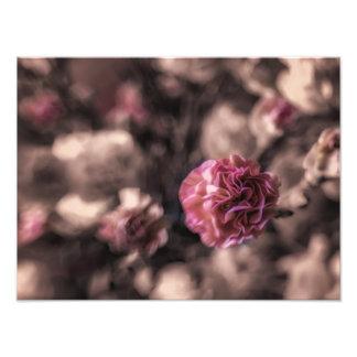 Foto Las impresiones del dulzor antiqued claveles