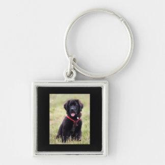 Foto linda del perrito del perro de Terranova, reg Llavero Cuadrado Plateado