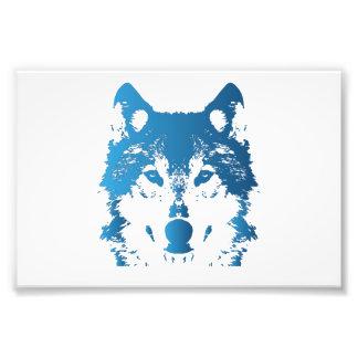 Foto Lobo de los azules claros del ilustracion