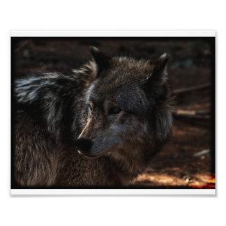 Foto Lobo de madera