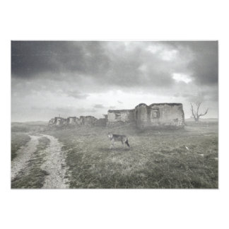 Foto Lobo por ruinas
