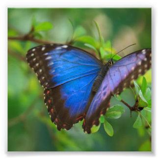Foto Mariposa azul