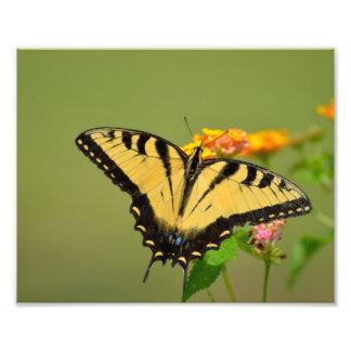 Foto Mariposa de Swallowtail