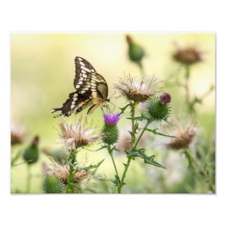 Foto Mariposa gigante de Swallowtail