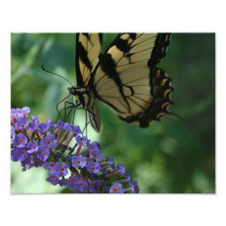 Foto Mariposa hermosa de Swallowtail del tigre en la
